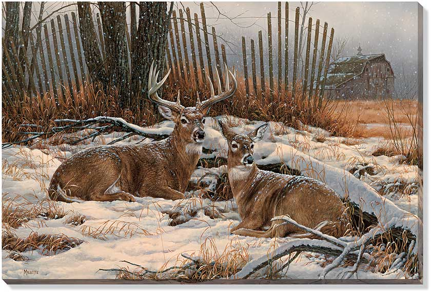 F593850565:&nbsp;<i>Windbreak Refuge Deer;&nbsp;</i> Wrapped Canvas