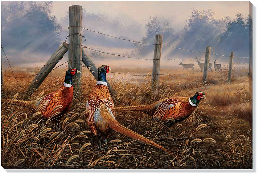 F593492619:&nbsp;<i>Meadow Mist Pheasants;&nbsp;</i> Wrapped Canvas