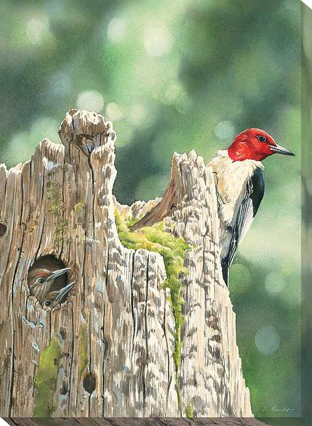 F085668531:&nbsp;<i>Red-headed Woodpecker & Family;&nbsp;</i> Wrapped Canvas